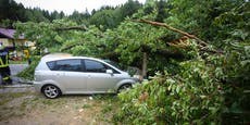 Frau stoppt Auto wegen Regen, da fällt Baum auf sie