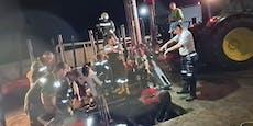 """Kuh """"Elmira"""" fiel drei Meter tief in eine Jauchegrube"""