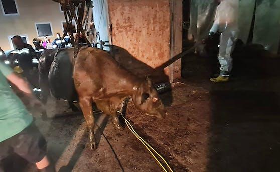 Die Kuh wurde während des Einsatzes mit Sauerstoff versorgt.
