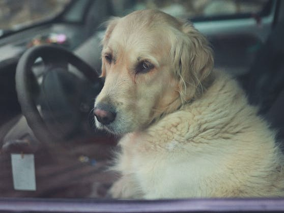 Die Feuerwehr schlug schließlich das Autofenster ein und rettete den Hund.