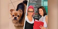 Frau (53) rettet Hund vor Tod und muss vor Gericht