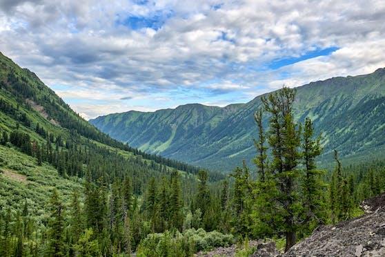 Russische Wälder könnten bei gezielter Aufforstung den Klimawandel abschwächen.