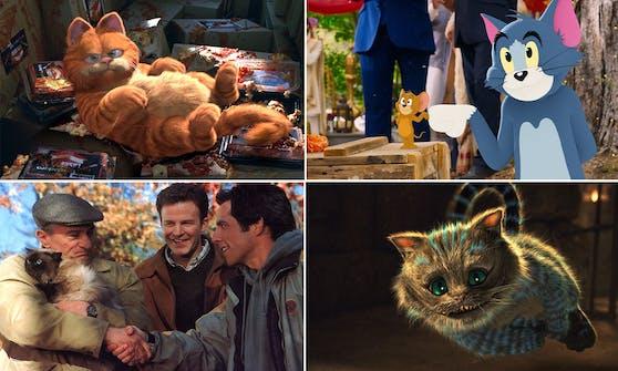 Wir haben die 10 bekanntesten TV- und Filmkatzen für euch zusammen gefasst. Wer ist euer Liebling?