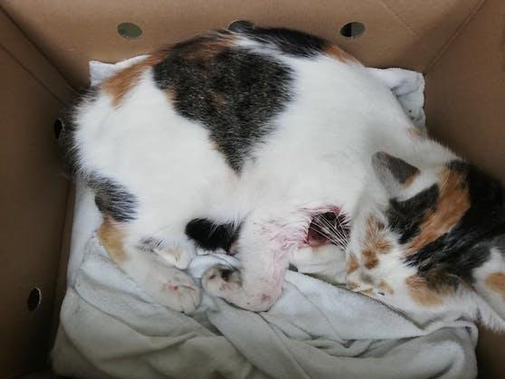 Ein Unbekannter schoss auf Katze Lily.