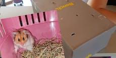 Herzlos! Hamster im Schuhkarton im Wald ausgesetzt