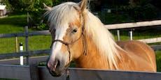 Frau (21) landet im Spital, weil sie Pferd streichelt