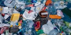 Plastikmüll ist Falle für junge Meeresschildkröten