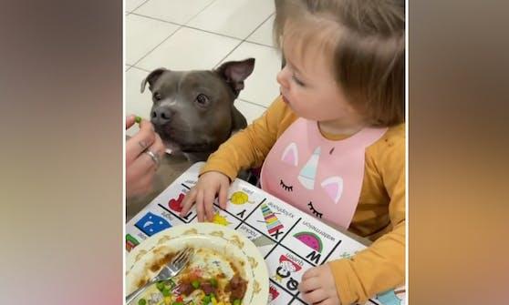 """Hund """"Brick"""" muss das Gemüse der kleinen Amiyah immer vorkosten. Sicher ist sicher."""