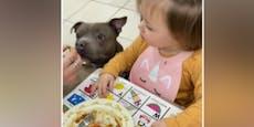Nur so isst einjähriges Mädchen ihr Gemüse...