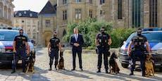 Vier tierische Sprengstoff-Ermittler für Wiener Polizei