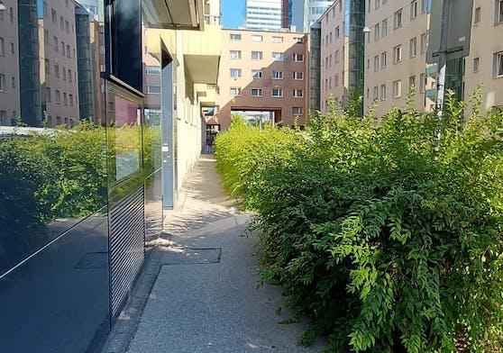 Hier kommt nur noch eine Person vorbei. Ein Gehsteig in der Linzer City ist zu einer Grünfläche mutiert.