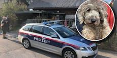 Trotz Halteverbot verwahrloste Hunde beschlagnahmt