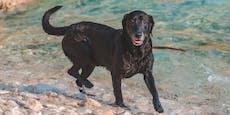 Kroatien-Urlauber schlägt Hund mit Hammer tot