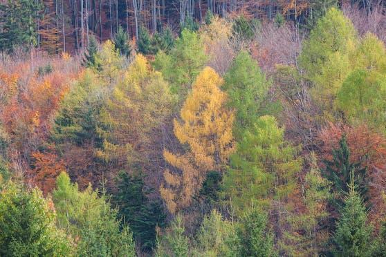 Die Klimaschutzfunktion des Waldes solle auch im Gesetz verankert sein, so der WWF.