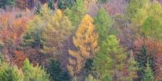 Maßnahmenpaket für Mischwälder vom WWF gefordert