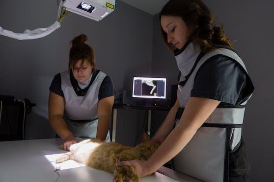Ein Röntgen brachte die Gewissheit, dass die Katze angeschossen wurde. Symbolbild.