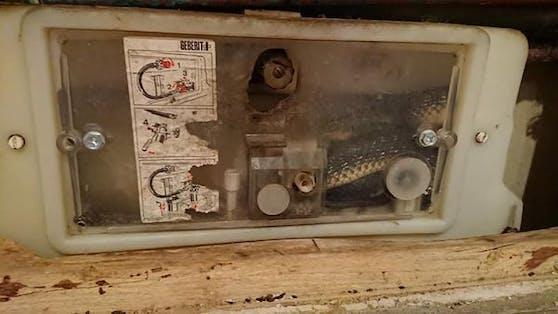 In Breitenfurt (NÖ) musste die Feuerwehr ausrücken, weil sich eine Schlange im Spülkasten eines WC versteckt hatte.