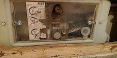 Schlangenalarm auf WC! Natter im Spülkasten versteckt