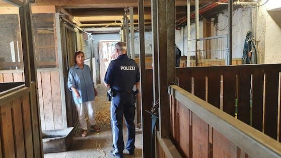 Im Tierparadies Schabenreith suchte die Polizei nach den verschwundenen Schweinen.
