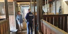 Tierparadies wegen 2 Schweinen von Polizei durchsucht