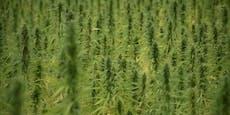Vier Drogenplantagen mit fremden Strom – 5 Jahre Haft
