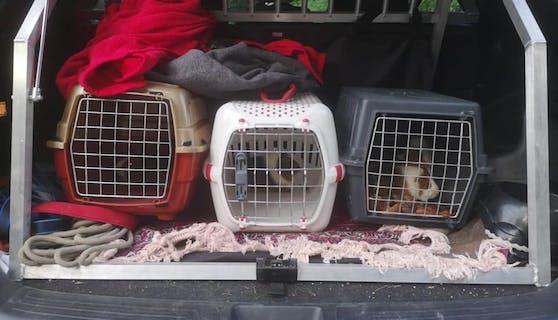 Die Tiere konnten eingefangen werden.
