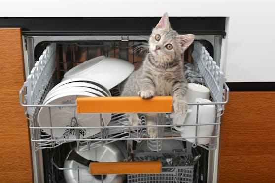 Okay, die Katze NICHT - soll aber sinnbildlich für die vielen Alltagsdinge stehen, die durchaus einen Geschirrspülgang vertragen.