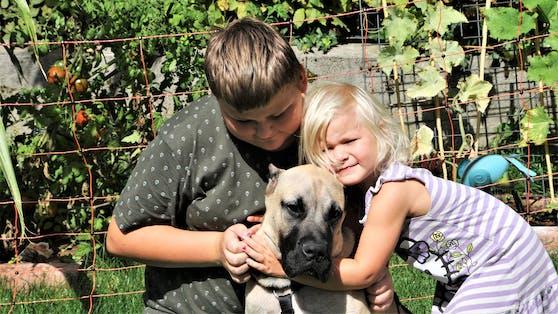 """Bei Familie Loyen fand der Mastif-Mischling nun ein liebevolles Zuhause. Luca (12), Lia (3) und """"Serrano"""" sind ein Herz und eine Seele."""