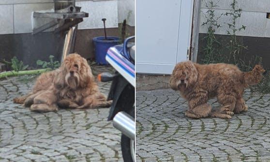 Wieso hilft man diesem Hund einfach nicht?