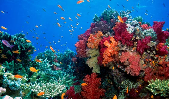 Weltweit sterben Korallenriffe aufgrund des Klimawandels.