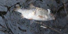 Teich unter Strom gesetzt, zahlreiche Fische verendet
