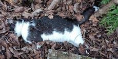 Nun steht es fest: Viele Katzen in OÖ grausam vergiftet