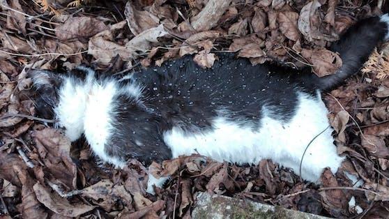 Bereits Ende April kam es im oberösterreichischen Reichersberg zu mehreren toten Katzen binnen weniger Tage.