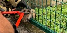 Feuerwehr Ebreichsdorf rettete Igel aus Gartenzaun