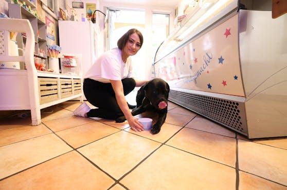 """Luna (3) ist ein Labrador-Mischling und steckt ihre Schnauze gerne in einen Eisbecher. Bei der """"Eismacherei"""" in Wien-Donaustadt ist sie Stammgast."""