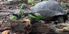 Erstmaliger Beweis: Schildkröten sind keine Vegetarier