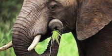 Was der Elefantenrüssel mit Robotern zu tun hat