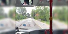 Tierlieber Busfahrer hält für Schwanenfamilie an