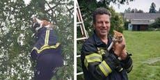 Baby-Katze saß zwei Tage auf Baum fest– gerettet
