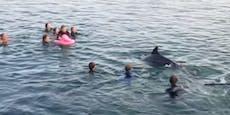 """Sexuell aggressiver"" Delfin belästigt Badegäste"