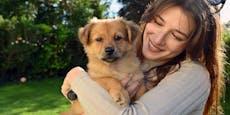 24 Tiere – Wienerin zahlt 8.000 € im Monat für Vierbeiner