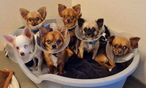 Im Tierheim Dechanthof müssen viele Tiere medizinisch versorgt werden.