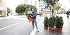Wiener fühlt sich gepflanzt, begrünt nun Straße selbst