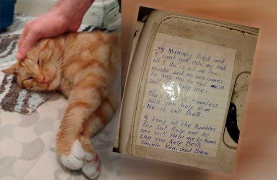 """""""Bob"""" hatte wohl tagelang vor dem Fenster ausgeharrt, nachdem seine Besitzerin gestorben war."""