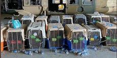Auch 51 Hunde warten auf Rettung aus Kabul