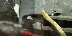 Schlange kriecht mitten auf Autobahn zu Familie in Pkw