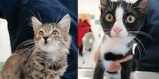 Abserviert! Katzen im Karton auf Parkplatz ausgesetzt