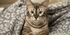 Gewünschte Corona-Impfung für Katze überführte Betrüger