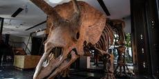 """Wer kauft """"Big John"""", den größten Triceratops der Welt?"""
