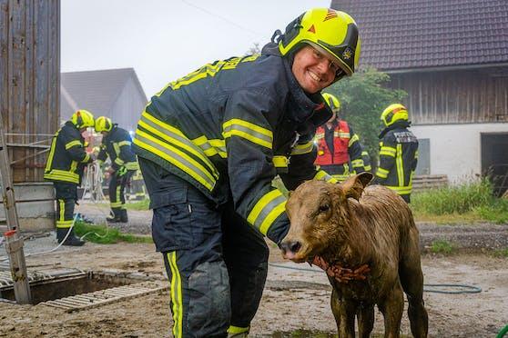 """Kalb """"Flora"""" wurde von Feuerwehrmännern aus einer Jauchegrube gerettet."""
